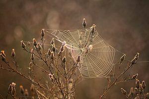 Spinnweben im Sonnenaufgang von Linda Lu