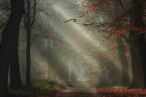 Romancing the forest van Roelie Steinmann
