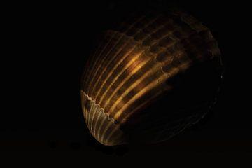 Nummer 3 der Nordseemuscheln von Studio de Waay