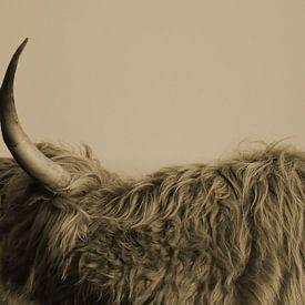 Schotse Hooglander zijkant met hoorn sepia van Sascha van Dam