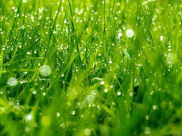Tautropfen im Gras von Martijn Wit