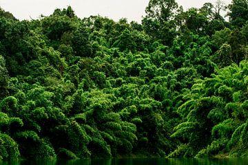 Tropisches Grün von Dennis Jansen