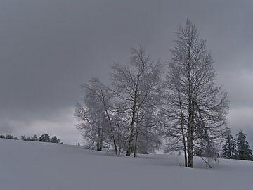 Winterlandschaft mit kahlen Birken in tiefem Schnee im Schwarzwald von Timon Schneider