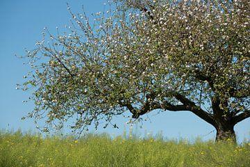 Vogeltje in bloeiende appelboom van Remke Spijkers