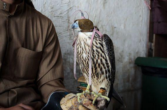 Valkenier met geblinddoekte valk in Doha, Qatar