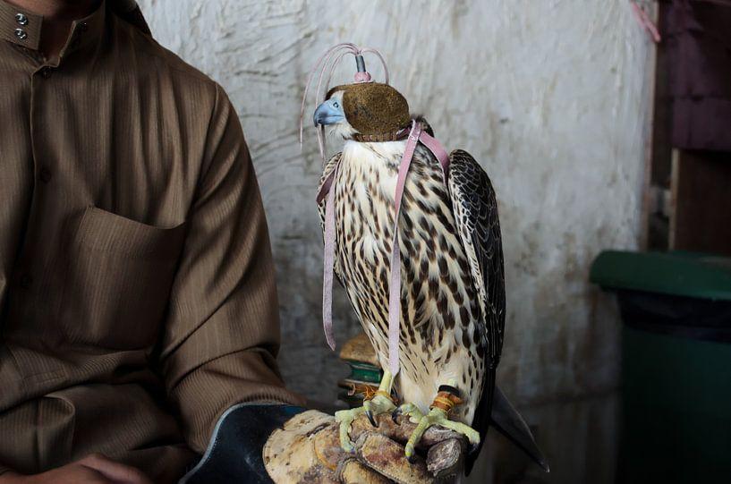 Valkenier met geblinddoekte valk in Doha, Qatar van iPics Photography