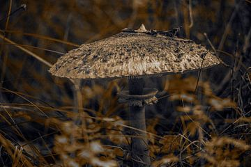 Pilz im Herbst von Fred Leeflang