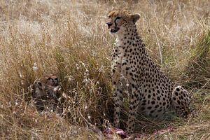Cheetah met jong  van René & Yvonne Claassen