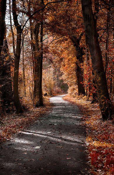 Autumn forest van Maarten Kuiper