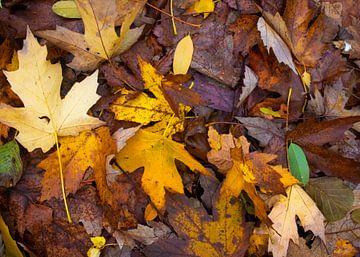 Herfst boeket van herstkleur bladeren van Micha Papenhuijzen