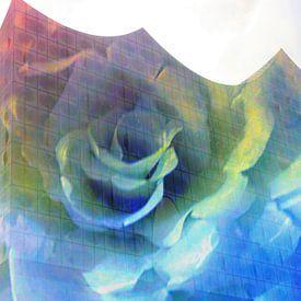 Elphi mit Rose van Peter Norden