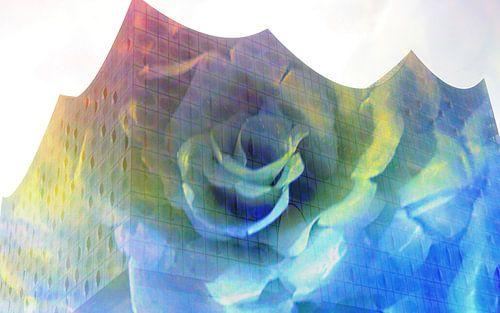 Elphi mit Rose van