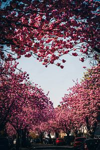 Kish bloesem hart van Fotos by Jan Wehnert