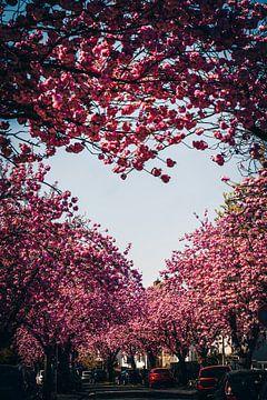 Kischblüten Herz von Fotos by Jan Wehnert