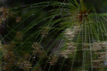 Papyrus van Miriam Duda