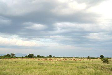 Queen Elizabeth National Park, Oeganda van Alexander Ludwig