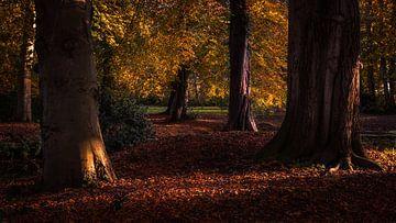 Herfstbomen van Marga Vroom