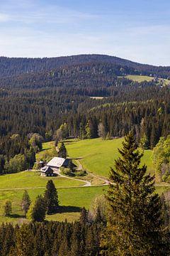Schwarzwaldhaus im Hochschwarzwald von Werner Dieterich
