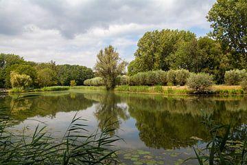 Reflecties in de  Biesbosch von Nel Diepstraten