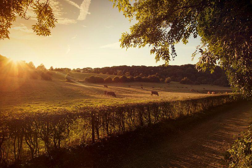 Zonsondergang bij natuurgebied Gerendal in Zuid-Limburg van John Kreukniet