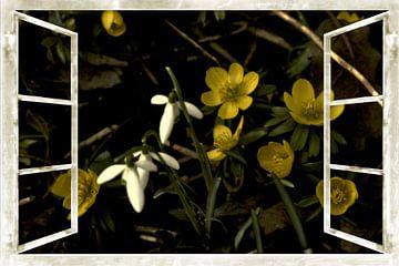 Image de la fenêtre - l'éveil du printemps sur Christine Nöhmeier