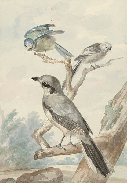 Drei Vögel: eine Schwanzmeise, eine Blaumeise und ein Klapper oder der Große Klauenmann, Aert Schoum von Meesterlijcke Meesters