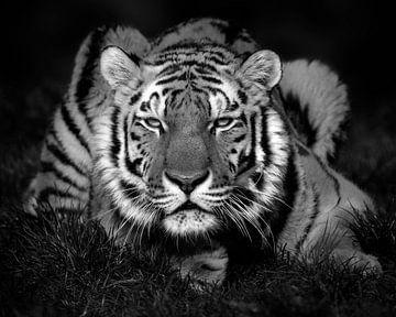 Tiger, der die Sonne genießt (schwarz-weiß) von Patrick van Bakkum