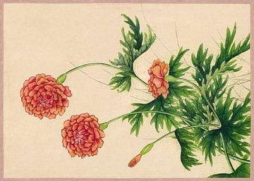 Pivoines, Zhang Ruoai, 18e siècle