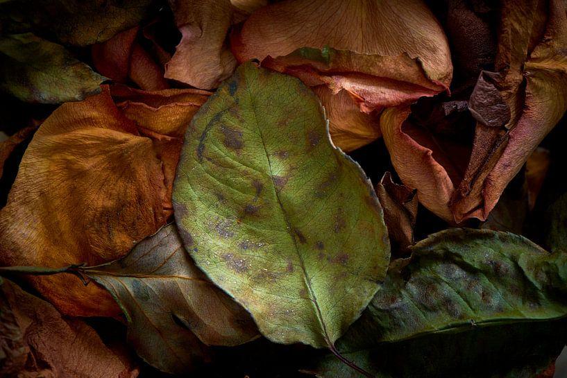 Gedroogd bloemblad van Jenco van Zalk
