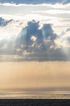Möwe bei Sonnenuntergang in Scheveningen Noord