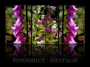 Triology - vingerhoedskruid  van Christine Nöhmeier