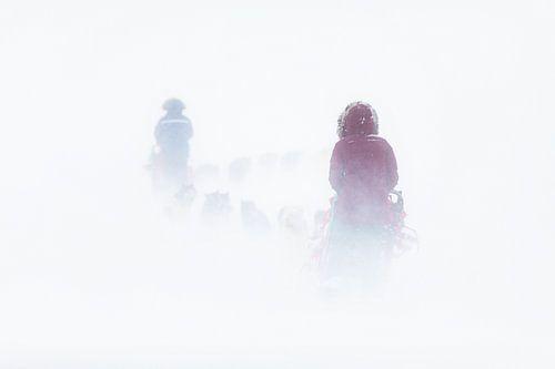 Husky sledetocht door sneeuwstorm