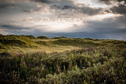 Texel duinen en mooi licht