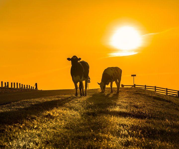 Koeien op de dijk onder Stavoren tijdens zonsondergang van Harrie Muis