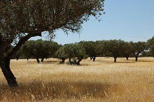 Grass when it is dry van