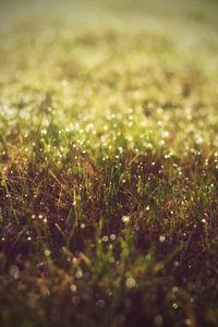 Meadow with dew