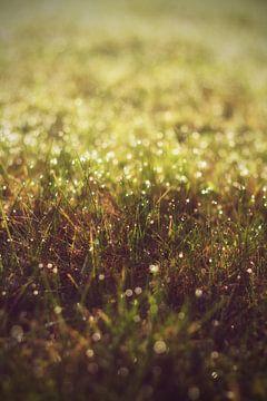 Meadow with dew van Malte Pott