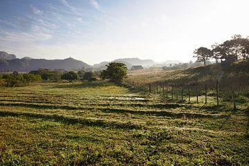Het beroemde  landbouwgrond en tabak gebied van Cuba bij zonsondergang, Valley DE Vinales, Pinar del van Tjeerd Kruse