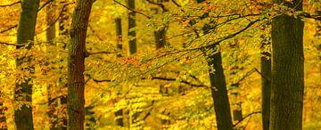 Vue de forêt de chute avec des arbres de hêtre et des feuilles d'or sur Sjoerd van der Wal