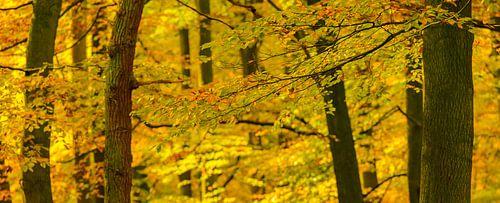 Beukenbos op de Veluwe in de herfst van Sjoerd van der Wal