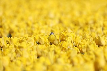 Sie sehen mich nicht, ich bin eine Tulpe. von Dian-Mary Stofmeel