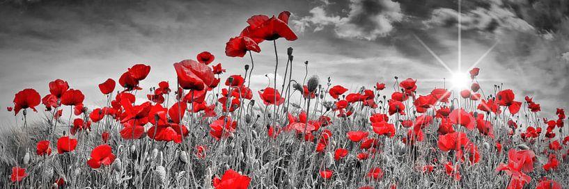 Idyllische Poppy Field   Panorama van Melanie Viola