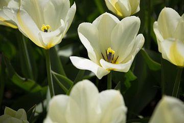 Witte bloemen sur Chris Snoek
