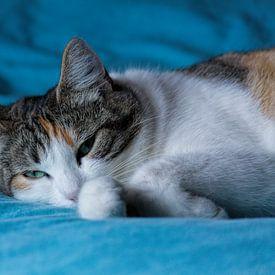 Katze auf blauer Decke von Christophe Fruyt