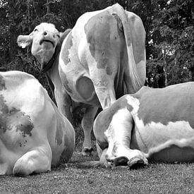 Koeien Relax van Kunstenares Mir Mirthe Kolkman van der Klip