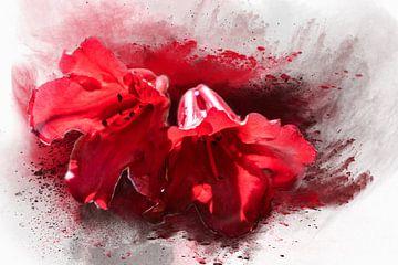 roten glockenförmigen Blüten sur Harry Stok