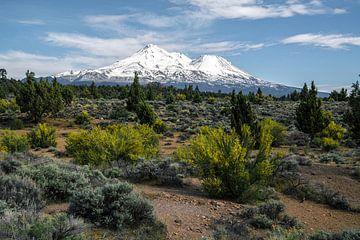 Mount Shasta van
