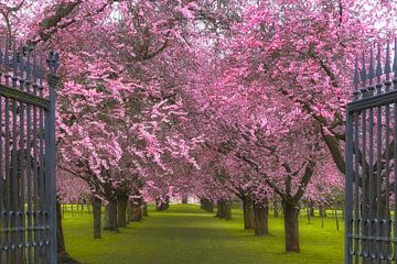 Doelstelling voor het lente von Thomas Herzog