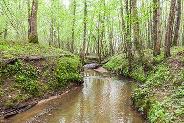 beekje in het bos in de zomer van Bernadet Gribnau