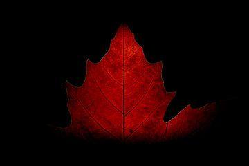 Das warme Herbstgefühl! von Ronald van Kooten